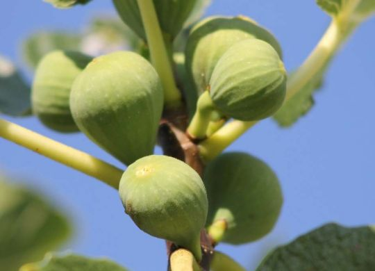 tree-nature-branch-blossom-plant-fruit-778699-pxhere.com_